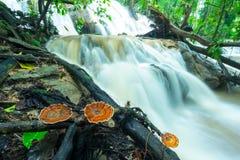 Pilz auf der Niederlassung die Rückseite ist ein Wasserfall stockfotos