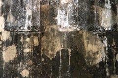Pilz auf der Wand Stockfotografie