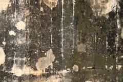 Pilz auf der Wand Stockfotos