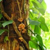 Pilz auf einem Baum. Lizenzfreie Stockfotos