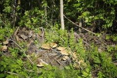 Pilz auf einem Baum Stockfoto