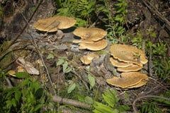 Pilz auf einem Baum Stockbilder
