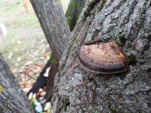 Pilz auf einem Baumstamm stockfotografie