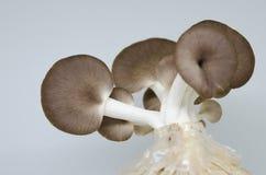 Pilz auf einem weißen Hintergrund Stockfotos