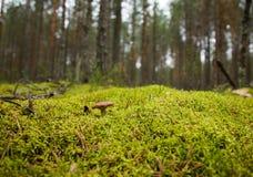 Pilz auf einer Lichtung Lizenzfreies Stockbild