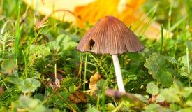 Pilz auf Gartenboden stockfotografie