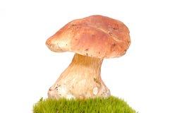 Pilz auf grünem Moos Stockbilder