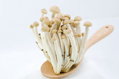 Pilz auf hölzernem Löffel Stockbilder