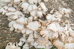 Pilz auf Holz lizenzfreie stockbilder