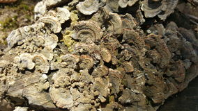 Pilz auf Holzoberfläche Stockbild