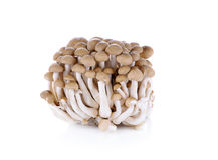 Pilz auf weißem Hintergrund Stockbilder