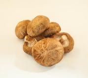 Pilz auf weißem Hintergrund Stockfoto