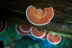 Pilz, der auf Bäumen wächst Stockbild