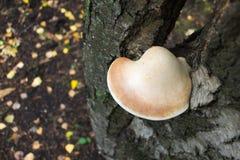Pilz, der auf einem Baum wächst Stockbilder