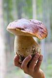 Pilz in der Hand Stockbilder