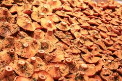 Pilz für Verkauf am lokalen Markt Lizenzfreie Stockbilder