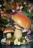 Pilz-Garten Stockfotografie