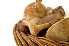 Pilz-Haufen im Korb Lizenzfreie Stockbilder