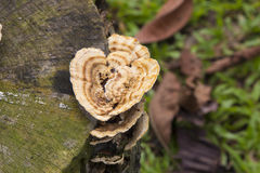 Pilz-Holz Lizenzfreie Stockfotografie