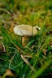 Pilz im Schwarzwald in Deutschland stockfoto
