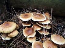 Pilz im Sherwood Wald lizenzfreies stockfoto