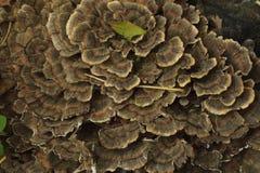 Pilz im Wald Lizenzfreies Stockbild