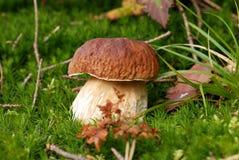 Pilz - im Wald Lizenzfreie Stockfotografie