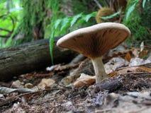 Pilz im Wald Stockfotografie
