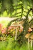 Pilz im Wald Stockbilder