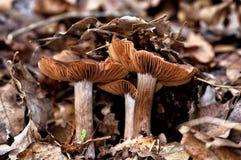 Pilz im Wald IV lizenzfreies stockbild