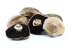 Pilz im Weiß Lizenzfreie Stockfotografie