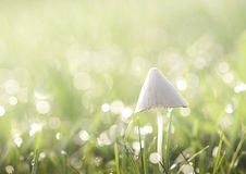 Pilz mit aus Fokustau heraus Stockfotografie