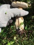 Pilz mit Würmern stockbilder