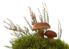 Pilz, Moos und Heidekraut I Stockfotos