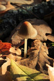 Pilz (Mycena viscosa Maire) lizenzfreies stockfoto