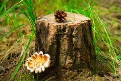 Pilz nahe dem Stumpf und einem Stoß Stockfotografie