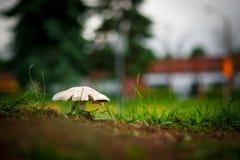 Pilz oder Giftpilz gegen unscharfen Bokeh-Hintergrund Lizenzfreie Stockbilder