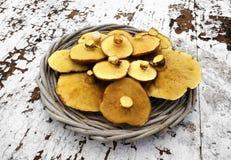 Pilz (Suillus luteus) glatter Jack Stockfoto