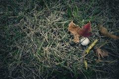 Pilz und Autumn Leaves Lizenzfreies Stockfoto