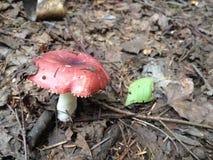 Pilz und Blatt Lizenzfreie Stockfotografie