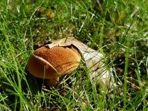 Pilz und Blatt stockfoto