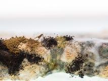 Pilz und Form auf geschnittenem Brot Stockbild