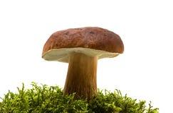 Pilz und Moos stockfotos