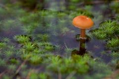 Pilz und Moos im Wasser Lizenzfreies Stockbild
