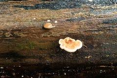Pilz und Schnecke Stockbild