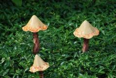 Pilz-Verzierungen im Singrün Stockbild