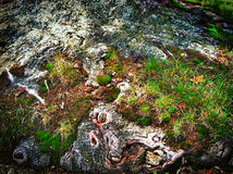 Pilz, Wald, Grün Stockbilder