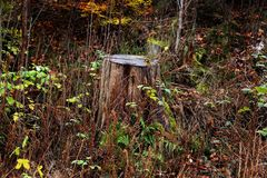 Pilz, Wald, Grün stockbild