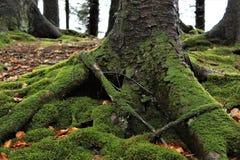 Pilz, Wald, Grün Stockfotografie