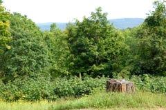 Pilz, Wald, Grün Lizenzfreies Stockfoto